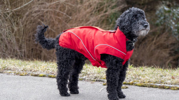 Dog winter jacket  in red