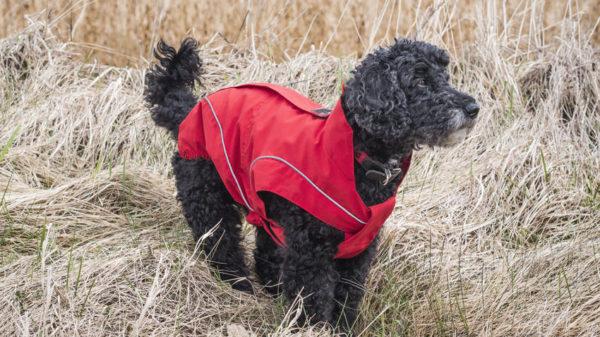 Hunde Regenjacke / Ganzjahresjacke – Rot